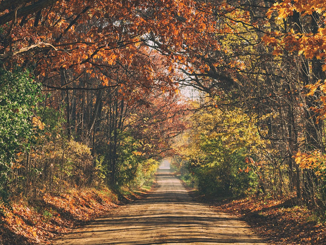 dirt road through the woods in the fall