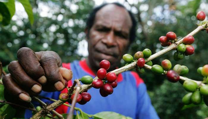 Kopi Wamena Papua