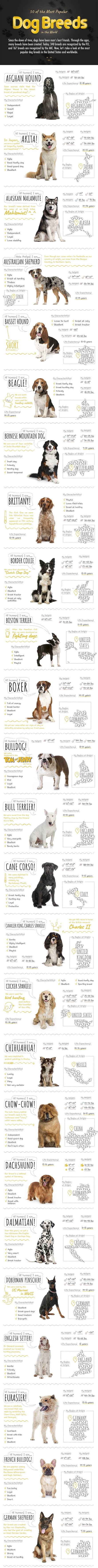 50 of the Most Popular Dog Breeds in the World #infographic #Dog Breeds #Animals #infographics #World #Most Popular Dog #Infographic #Popular Dog Breeds
