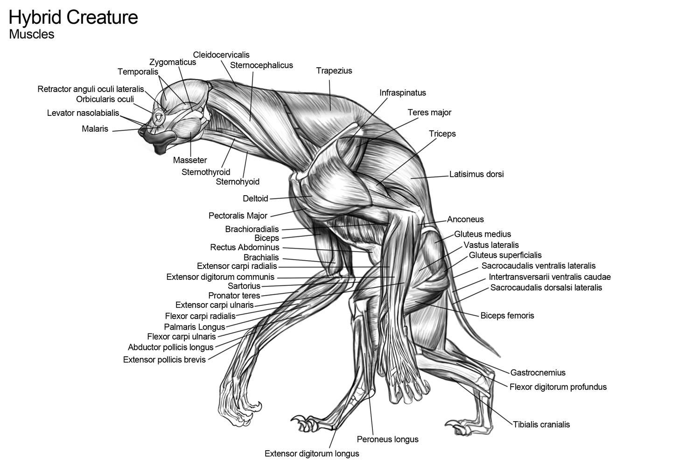 Raul Ramos Art: Creature Anatomy
