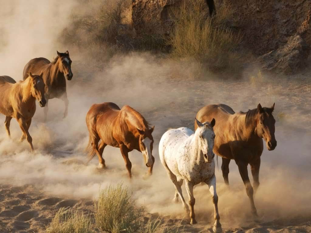 Good   Wallpaper Horse Summer - They+shoot+horses+don+t+y+What+Gives  Graphic_829736.jpg