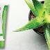 Az Aloe Vera titka | Equilibra - Aloe Dermo Gél