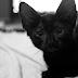 A tentativa de blogar ao lado de um felino