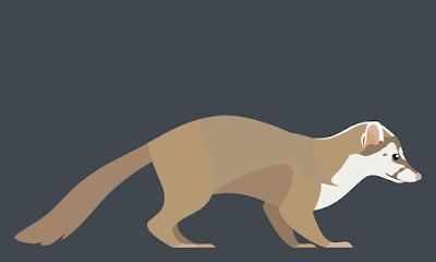 endangered Badger
