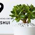9 Tanaman Hias untuk Feng Shui Rumah
