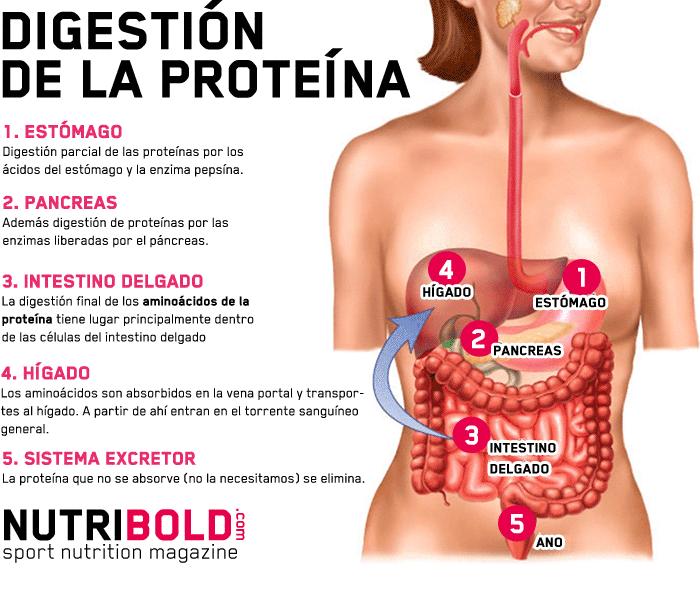 Proteina para bajar de peso yahoo travel