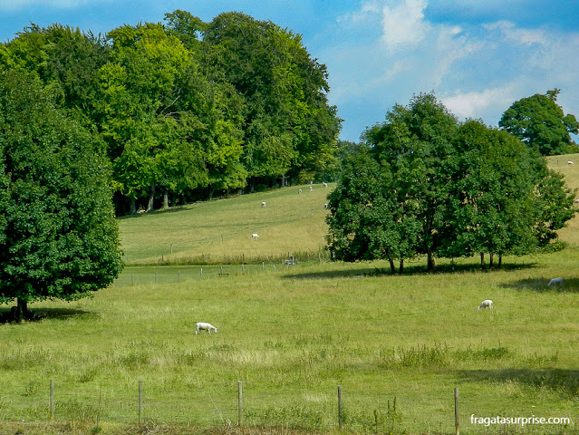 Ovelhas pastam em um parque de Chawton, vila onde viveu Jane Austen