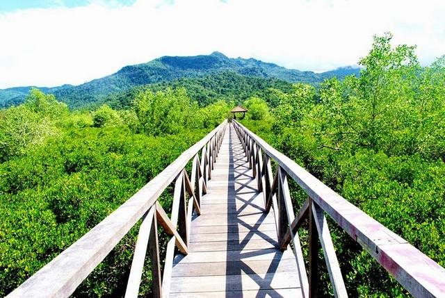 Ecowisata Mangrove;Destinasi Wisata Trenggalek ;