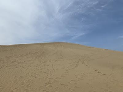 馬の背を見上げると砂の壁