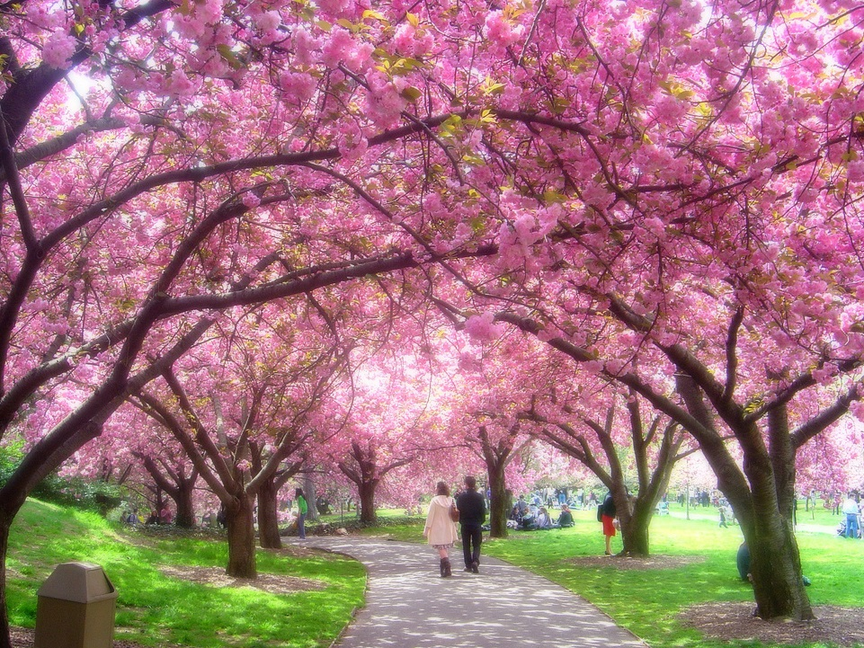 Keindahan Negeri Jepang Terimalah Salam Ku Sakura