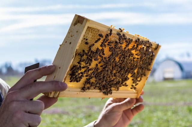 Πωλούνται μελίσσια και μελισσοκομικός εξοπλισμός στην Κορινθία