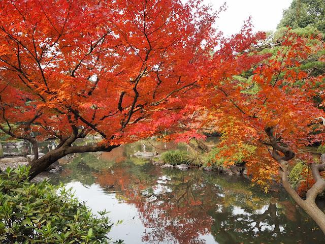 旧古河庭園09