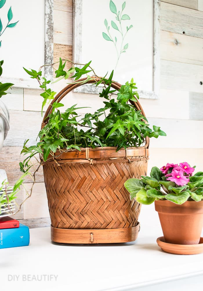 live plants in basket