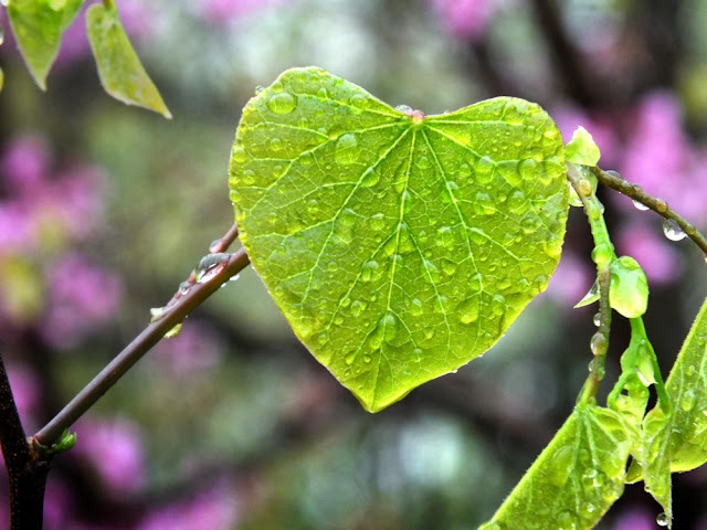 happy eco-friendly valentine's day - Heart Shaped Leaf