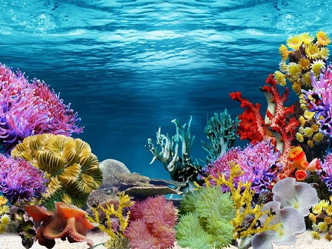 Reason Why You Should Use A Beautiful Fish Tank Background