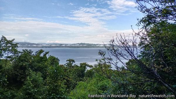 tropical rainforest in Wondama regency of West Papua
