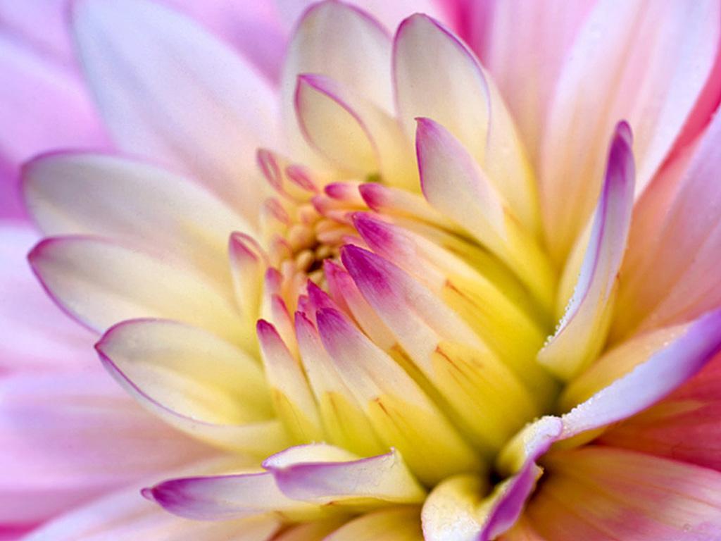 Flower Background Wallpaper | Desktop Wallpapers