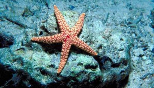 Denizyıldızı Hakkında Bilgi