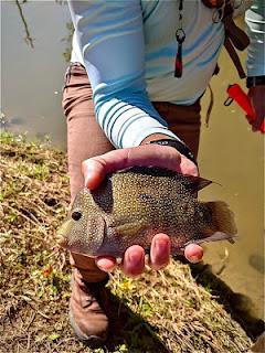 Xavier Jaime, Rio Grande Cichlid, Fly Fishing For Rio Grande Cichlid, Texas Fly Fishing, Fly Fishing Texas, Texas Freshwater Fly Fishing, TFFF, Pat Kellner, Year of the Rio, #YOTRio2021