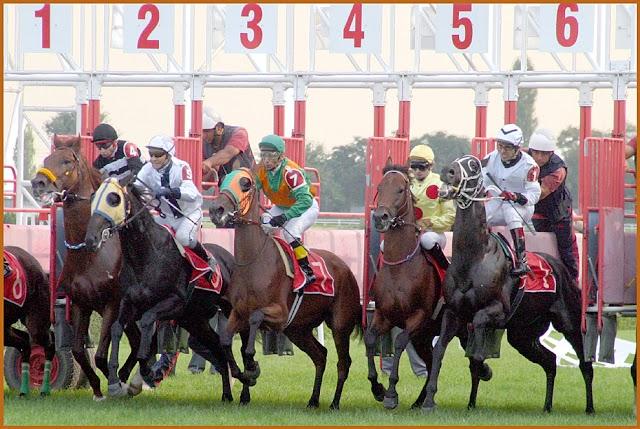 14 Ocak 2021 Perşembe Şanlıurfa Altılı Tahminleri | At Yarışı Tahminleri