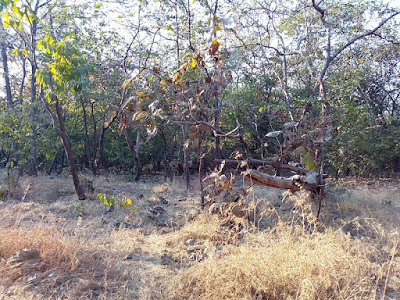 Types of forest found in India