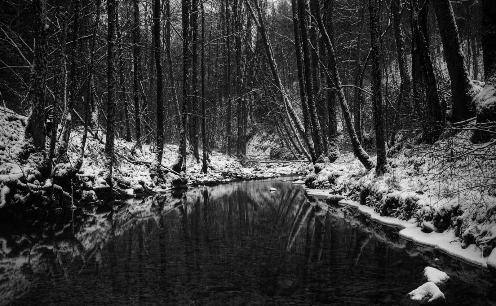 Dark Winter Forest Wallpaper