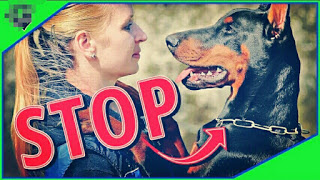 Things you should stop doing with your dog