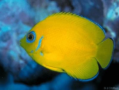 Jasa Import Ikan Hias Thailand Ke Bali