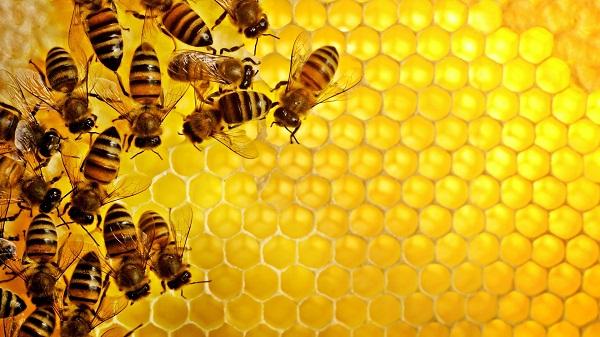 mật ong chữa bệnh gì