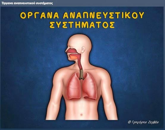 http://users.sch.gr/gzervos/anapneustiko_organa/story.html