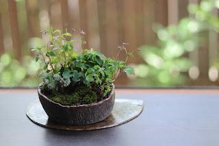 盆栽作品 半月の陶盤の上