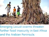 https://sciencythoughts.blogspot.com/2020/04/emerging-locust-swarms-threaten-further.html