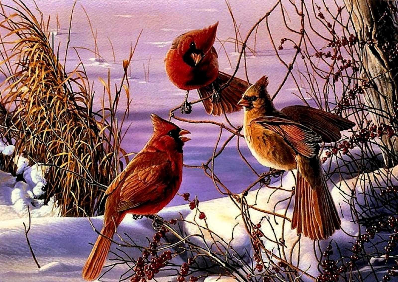 cardinal winter computer wallpaper - photo #24