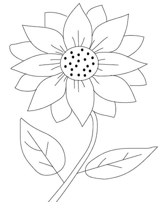 61 Sketsa Gambar Mewarnai Bunga Matahari