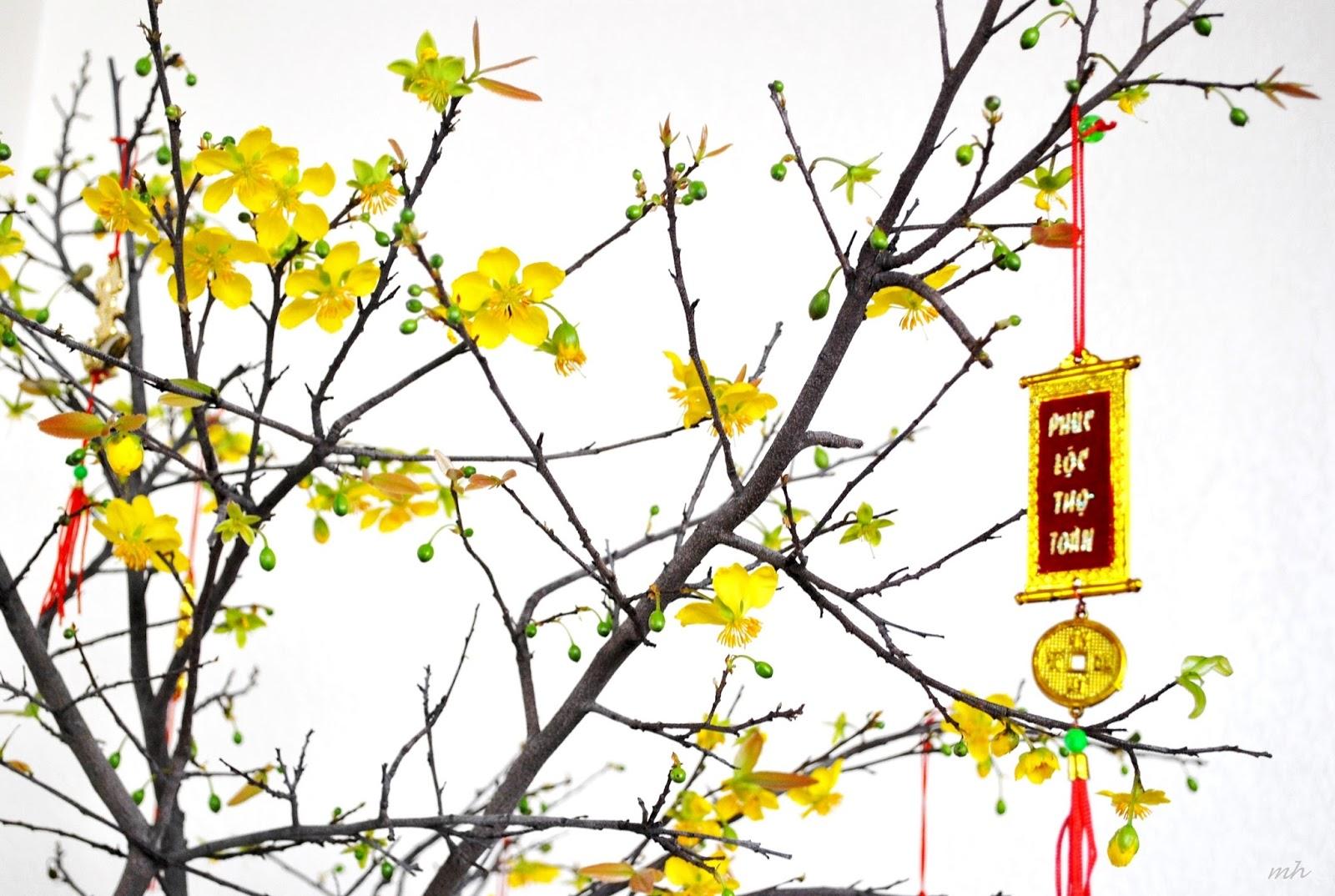 Yellow Apricot Flower Hoa Mai Vietnam Famous Destinations
