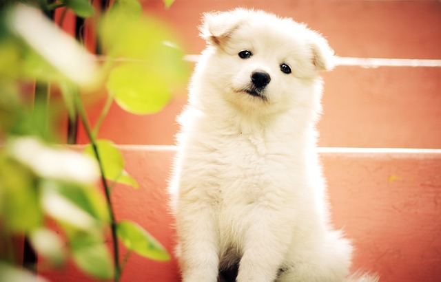 White Cute Puppy Images HD Download