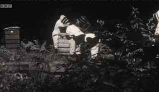 Alys in a beekeeping suit
