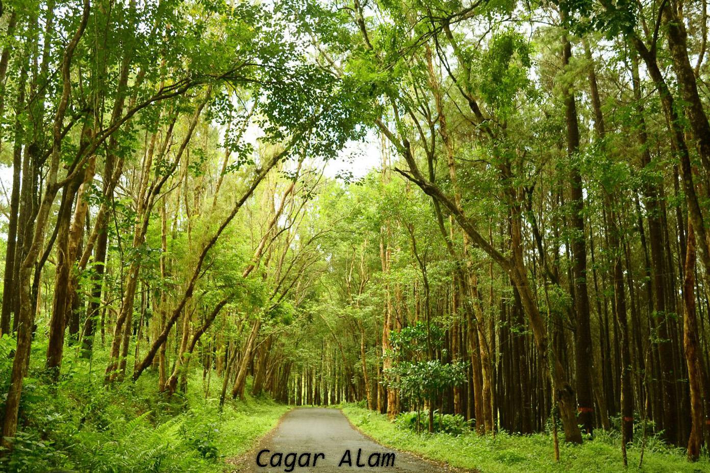 Pengertian Cagar Alam, Suaka Margasatwa, Taman Wisata Alam ...