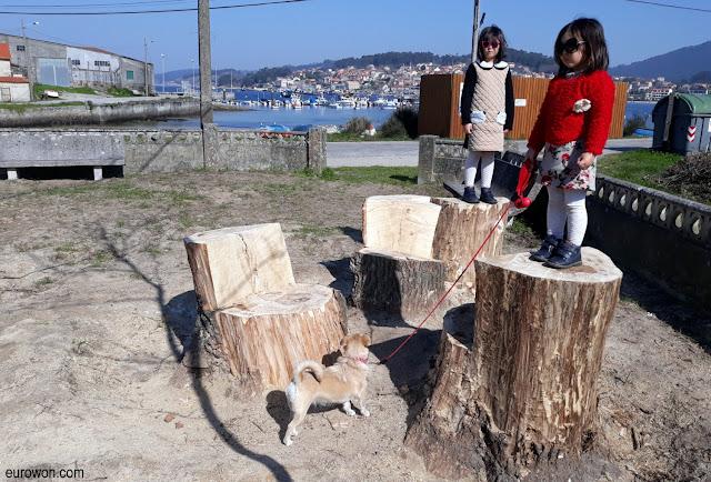 Nenas sobre tocones de árboles