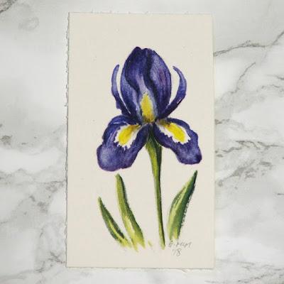 Iris watercolour sketch