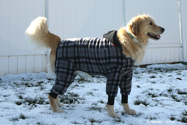 why your dog should wear a snojam fleece coat in the winter