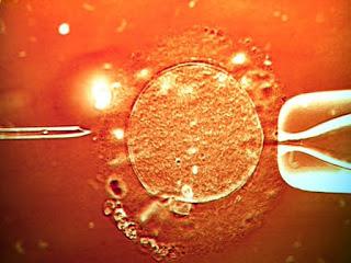 Japão aprova nascimento de embriões híbridos de humanos e animais