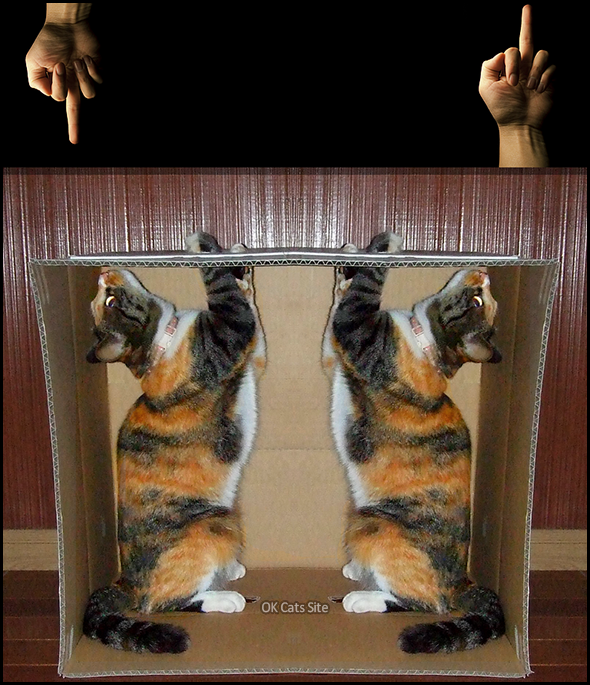 Photoshopped Cat picture • WTF is that? Twin cats are very intrigued by 2 middle fingers [ok-cats-site.com]