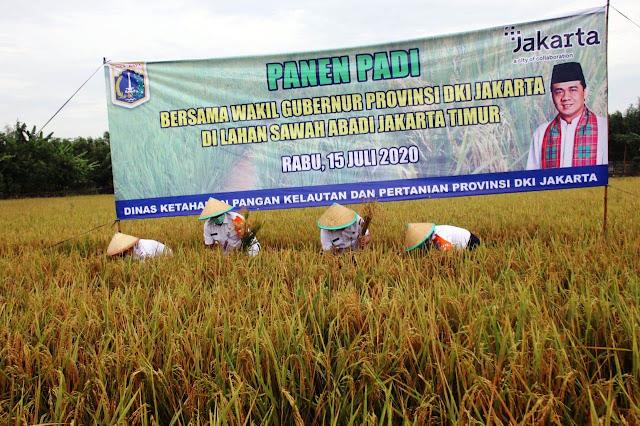 Panen Bersama Petani, Wagub DKI Ketahanan Program Pangan Terus Berjalan