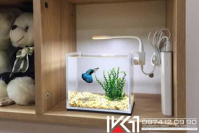 Bể cá mini văn phòng giá rẻ