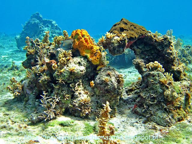 Fundo do mar Cozumel, corais