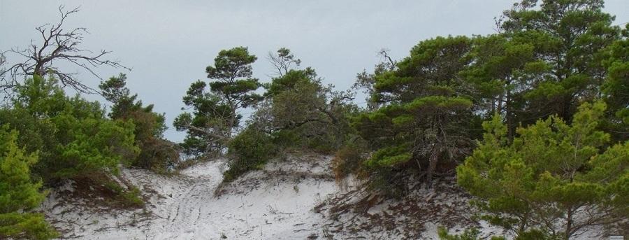 Arenas en las reservas naturales junto a la US 1, Juno Dunes Natural Area