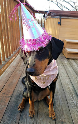 doberman mixed breed rescue dog birthday hat