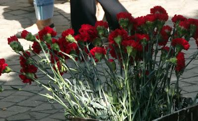 vários cravos vermelhos num vaso