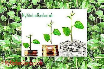 Having money plant at home brings good luck, happiness, wealth and prosperity